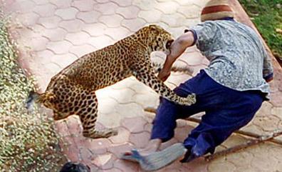 leopard never changes its spots